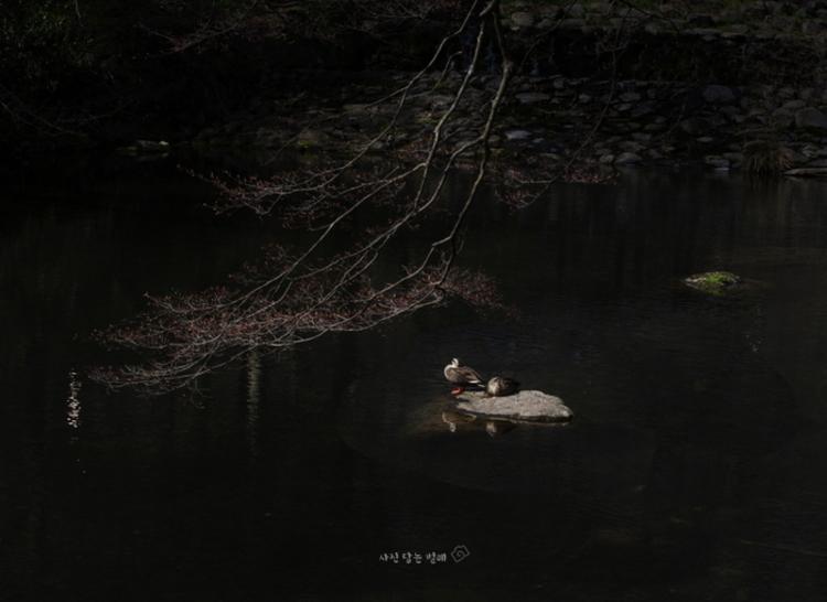 정해춘의 사진여행 '산사의 봄'